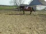 Henri trot barre au sol