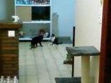 Fifille et Kyla qui jouent