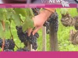 Terroirs et cépages vin wine