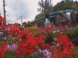le temps des cerises à Naucelle  -côté jardin -