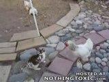 Baston, les poulets interviennent