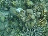 Bunaken: pesci, coralli e versetti