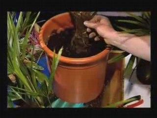 Visionnez les Cours Vidéo de Plantes du sud - Conseil Jardinage