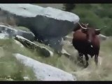 Cantal: Animation aquarelles(autour du Puy Mary)