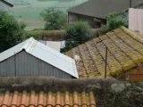 Le chat sur le toit