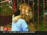le lion fait bisous bisous avec un gars c'est trop ouf