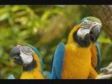Perroquets et perruches