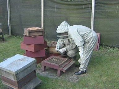 Government urged to do more for bees