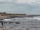 Pointe Saint Gildas : mouettes