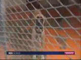 Abandon de chiens en Alsace [news] Fr3 Alsace 150709