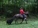 TÖLT en equitation ethologique