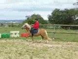 Frisia's Storm King, étalon Welsh A, 3 ans.