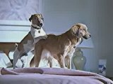 pub : chiens et preservatif