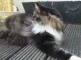 Raoul le chat