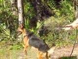 Protection Dog- Nikki Handler protection
