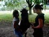 poney et chevaux du club 071