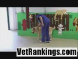 Columbus Veterinary Clinic | Hillview Vets