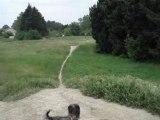 course avec mon chien