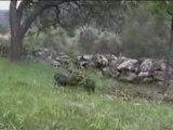 4x4 lawn mower tondeuse rc