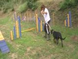 dolce agility tests sauts