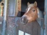 Il y a presque tous les poneys du club car il n'y a pas tout le monde!!
