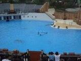 04/06/2008 - Parc Astérix : Le Spectacle des Dauphins