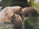 Alaska.org - Alaska Waters - Wrangell Alaska - Official ...