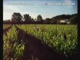 Traitements de la vigne en Languedoc-Roussillon