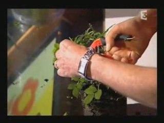 Visionnez les Cours Vidéo de D�placer un arbre - cours de jardinage