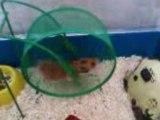 mon hamster et sa roue!
