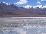 Laguna Colorada Altiplano Bolivien