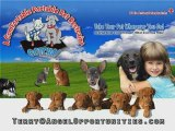 Angel Opportunities: Pet Restraint & Energy Saver Inventions