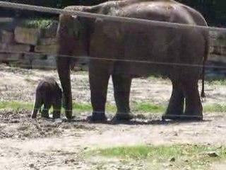 Bébé elephant du Pal