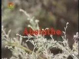 phytothérapie : Absinthe