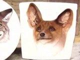 Optical Illusion 2 ( nos cheres amis animaux )