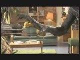 Alien vs Predator: combat de chi-fou-mi