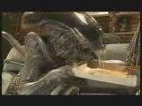 Alien vs Predator : soirée pizza