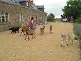 sortie de chèvres 07.2008