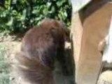 mon chien qui cherche des rats !