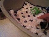 Les bébés jouent après la bouillie (2)