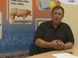 Races laitières : situation et tendance
