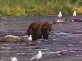 nounours l'ours