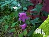 Photos Fleurs Montagnes et Jardin