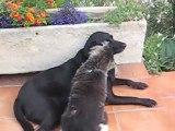 Amour et calins entre chien et chat