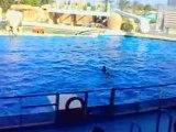 Marineland - spectacle des dauphins