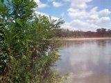 Chants d'oiseaux au bord de La Loire à Bonny sur Loire