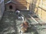 jeux de chien et chat! - juillet 2008