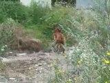 """Gonzo le chien, dans :""""j'enterre mon caca..."""""""