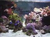 Aquarium Marin 850 Litres