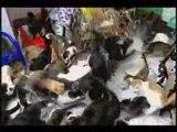 Une vieille russe avec 130 chats dans son appart